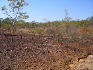 Laterised surface near 17 Mile Falls, Jatbula Trail, NT.