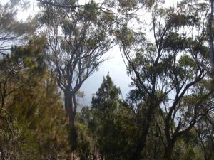 Bushfire in Kunderang Valley