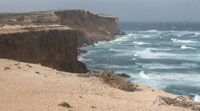 Ark on Eyre:  The Cape Labatt sea lion colony.