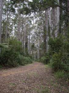 The Moogem Trail
