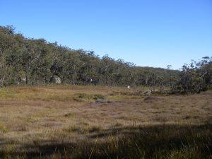 Sub-alpine swamp on NW Trail