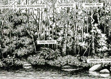 Warm Temperate Rainforest. Source: NSW NPWS Brochure.