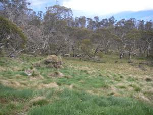 Farm Ridge