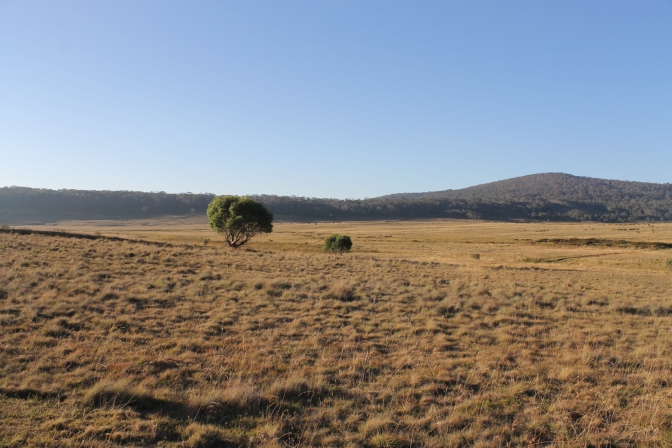 Long Plain: Northern Kosciuszko National Park.