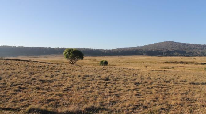 Long Plain: Northern Kosciuszko National Park.