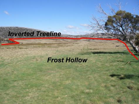 Inverted Treeline: Nth Kosciuszko