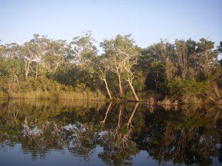 Upper Noosa River