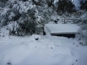 Tent Platform: Wild Dog Creek.