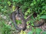 Python on Winder Track