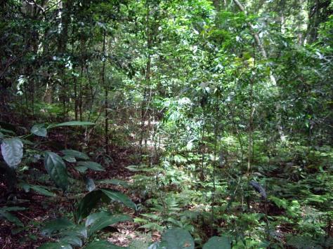 Rainforest on Mistake Mountains