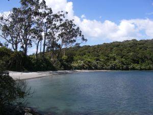 Port William & Australian gum trees.