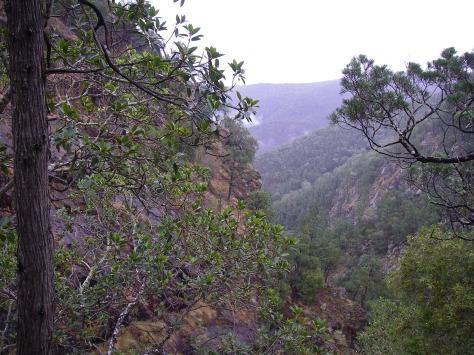 View down Mt Donaldson Ck