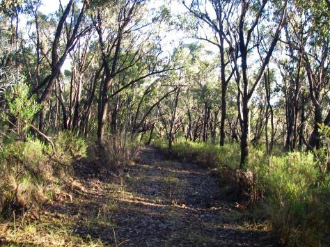 4WD track on spine of Roberts Range