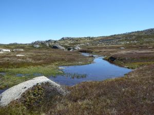 Bogs and Fens in upper Valentine River
