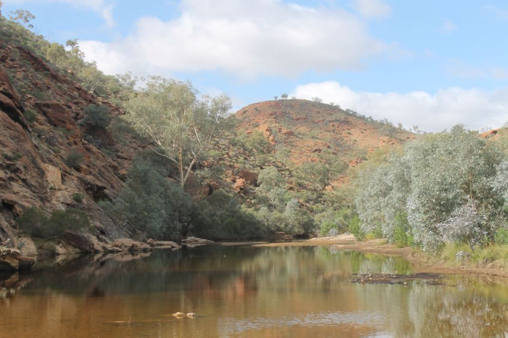 Waterhole on Hamilton River
